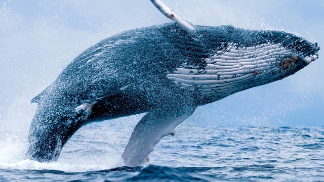 How to Protect your Cryptocurrencies from Whales