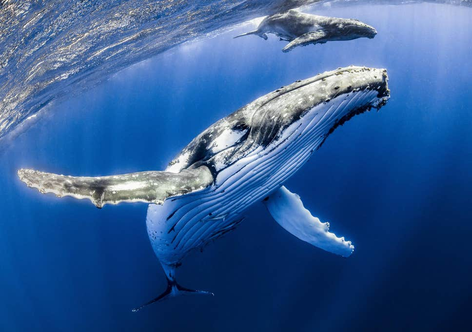 How do whales manipulate the price of Bitcoin? It's quite simple