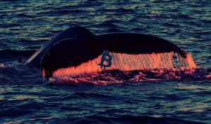 Bitcoin whales purchased 60,000 BTC during the highest daily accumulation peak of 2021