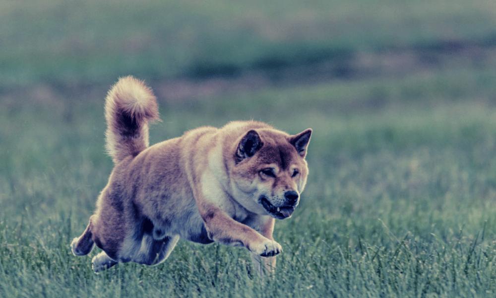 Game of the dog crypto throne – Dogecoin or Shiba Inu?